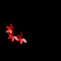 Viola Medium